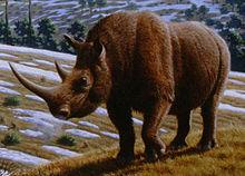 File:220px-Woolly rhinoceros (Coelodonta antiquitatis) - Mauricio Antón.jpg