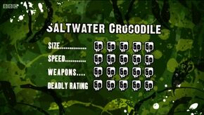 S3 DR saltwater crocodile