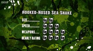 S3 DR hooked-nosed snake