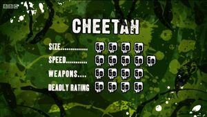 S3 DR cheetah