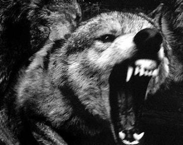 File:Prodigy Wolf.jpg