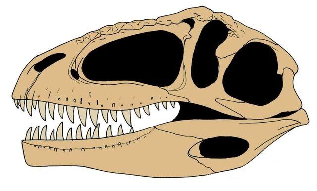 File:Giganotosaurus skull.jpg