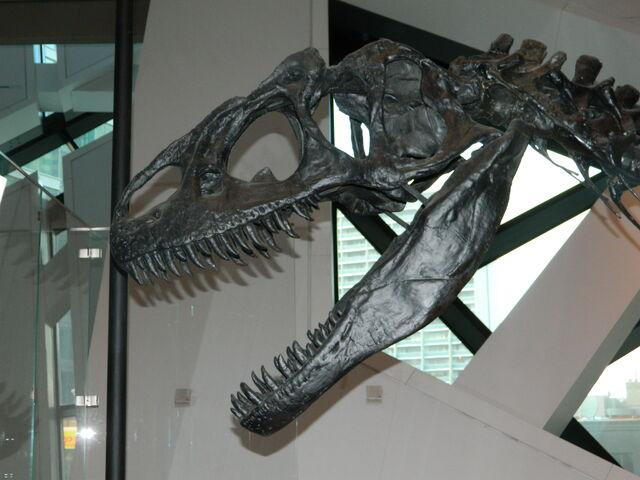 File:Allosaurus skull.JPG