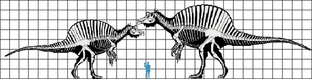 File:Spinosaurus scale (max + min).png