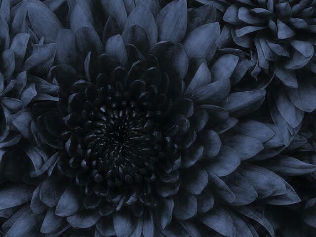 File:Flowerau.jpg