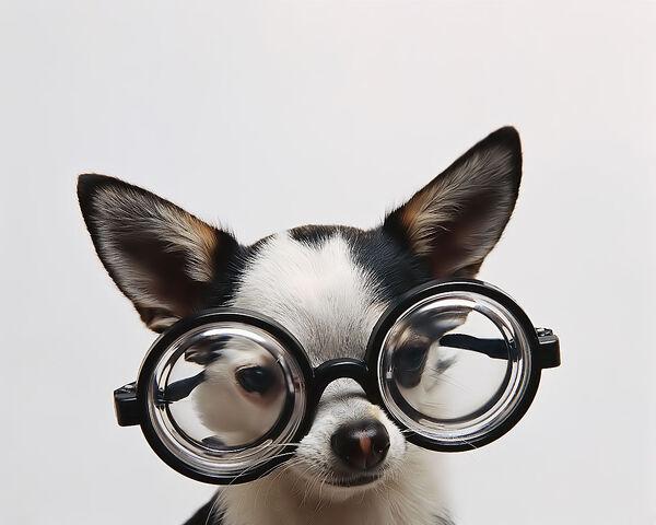 File:Cute Dog ;).jpg