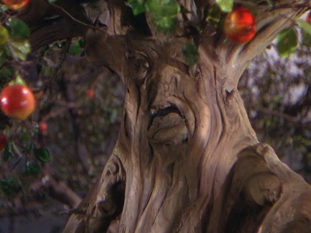 File:Tree.Eplicetic.jpg