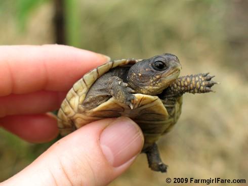 File:Baby-turtles-3-turtles-28176492-490-368.jpg