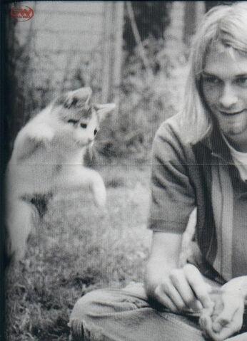 File:Kurt-cat-1.jpg