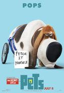 The Secret life of Pets 12