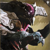 King's Fall source icon