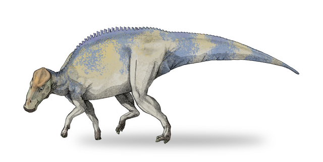 File:Brachylophosaurus by Debivort at the English language Wikipedia.png