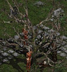 File:Blood Raven cemetary tree.JPG