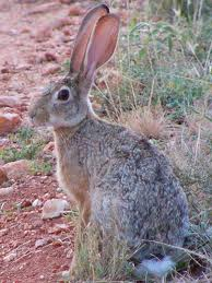 File:Hare animagus.jpg
