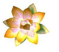 Yonoko - Goldener Lotus.jpg