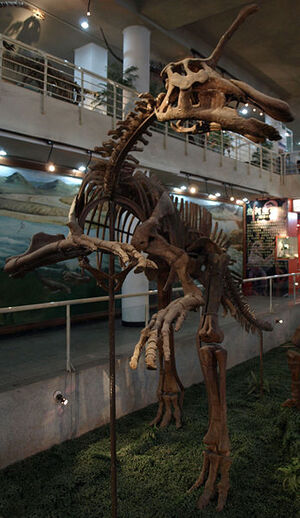 FileTsintaosaurusSpinorhinus-PaleozoologicalMuseumOfChina-May23-08