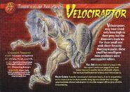 Velociraptor front