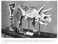 Sharp hutchinson triceratops2
