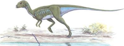 File:Orodromeus.jpg