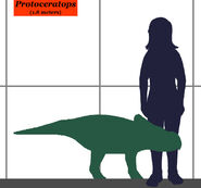 Protoceratops-human size