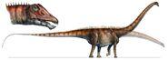 34-Diplodocus-carnegii
