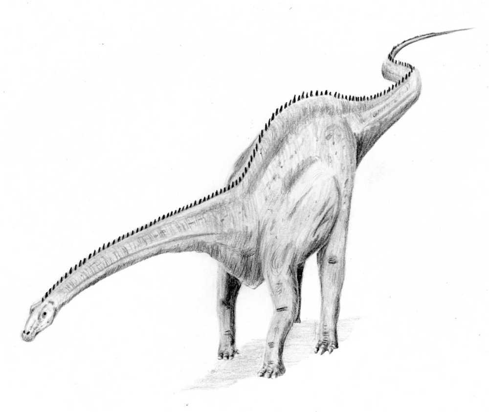 Herbivore dinosaur wiki fandom powered by wikia - Dinosaure diplodocus ...