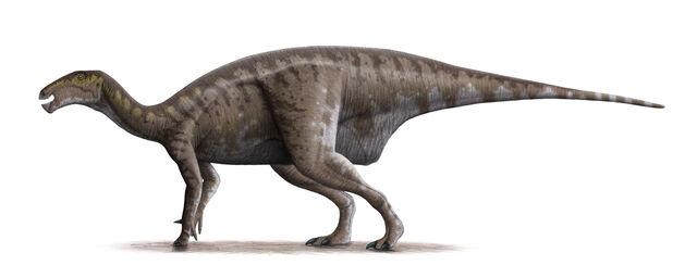 File:Mantellisaurus atherfieldensis Steveoc.jpg