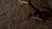 Pterodactylus 1