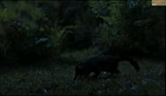 Laolestes hunting