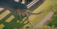 Cetiosaurus3