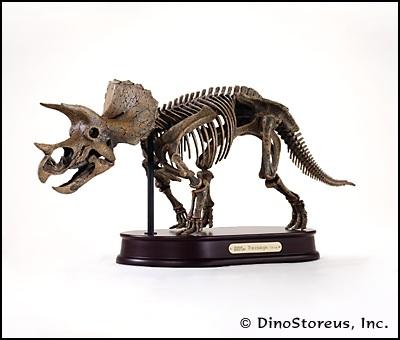 File:Triceratops skeleton.jpg