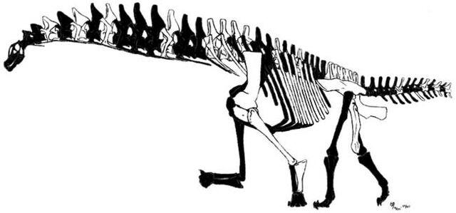 File:Isisaurus skeleton.jpg