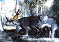 Styracosaurus.