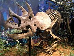 250px-Triceratops prorsus - IMG 0697