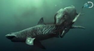 Dinosaur Revolution vs. Mosasaur Rampage vs. Squalicorax Sharks 1