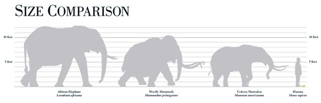 File:Elephant Family Size Chart.jpg
