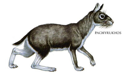 Pachyrukhos-cat-rabbit