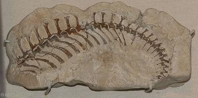Dolabrosaurus