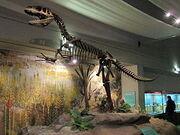 250px-Megalosaurus, World Museum Liverpool