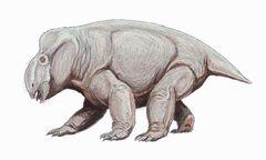 Placerias hesternus.jpg