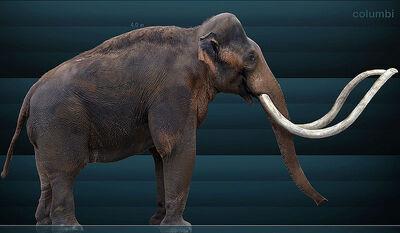 800px-Mammuthus columbi Sergiodlarosa