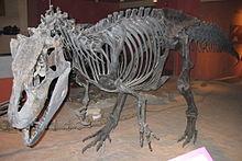 220px-Allosaurus fragilis USNM4734