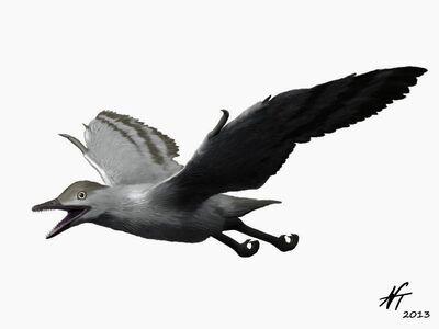 Sulcavis NT