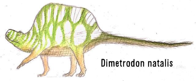 File:Dimetrodon march 2 by plastospleen-d972yla.jpg
