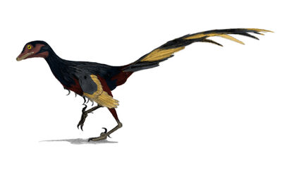 Shenzouraptor