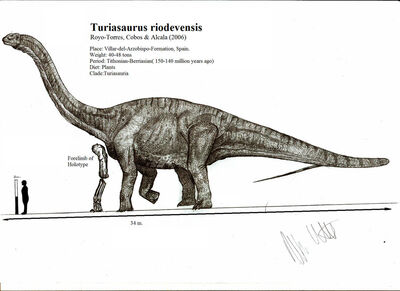 Turiasaurus riodevensis by teratophoneus-d4xfext
