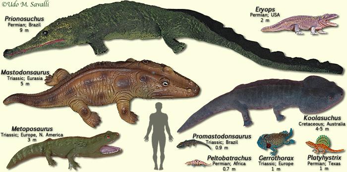 Temnospondyls