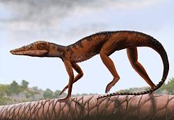 File:Litargosuchus leptorhynchus.jpg