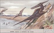 I Dinosauri - Pteranodon
