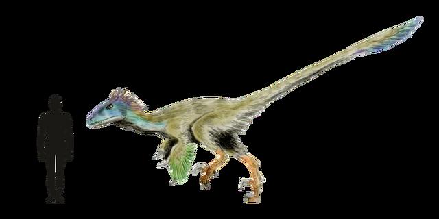 File:Utahraptor Size Comparison.png